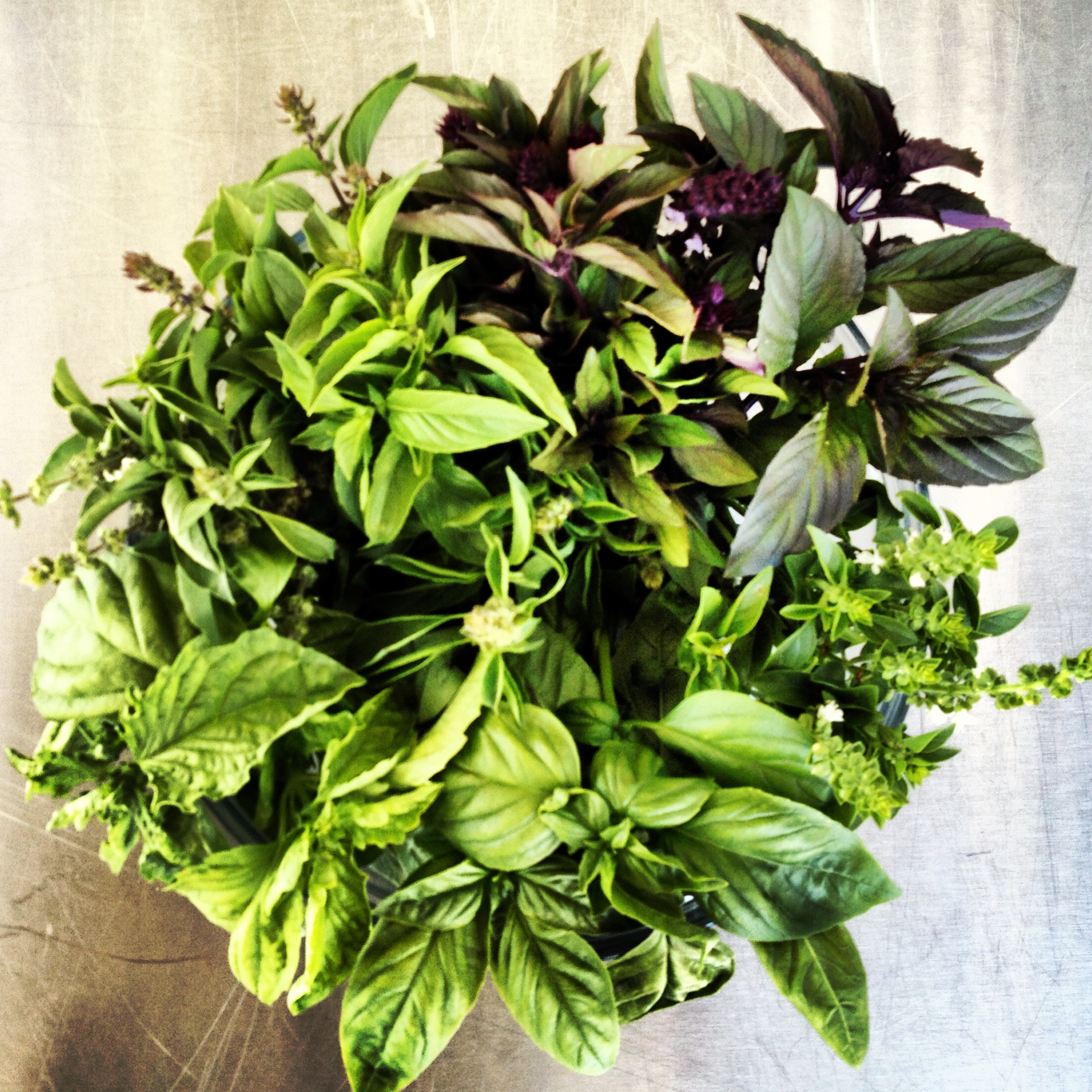 Four types of basil grown right here at the Fullerton Arboretum accompained tonight's menu!